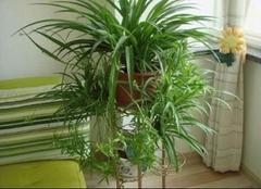 2017常见净化空气的室内植物排名推荐  你值得拥有