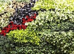 2017室内植物墙做法推荐   让你在家也能感受大自然