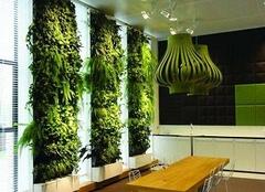只要你有心  植物也能爬上墙