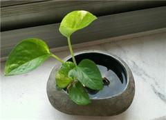 最好养的办公室植物 让你每天都可以看见绿色