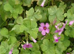 五大耐寒植物推荐  让你安心过冬
