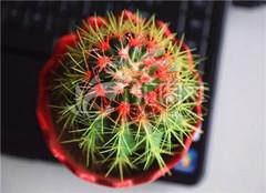让办公桌与众不同的植物