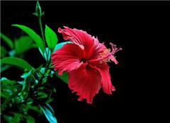 养好这几种植物 让你天天都有花