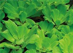 十大最好看的水生植物介绍 让你一饱眼福