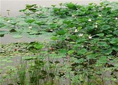 学会这几招 养死水生植物都很难
