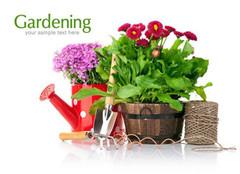 室内盆栽花卉如何选购 结合自身实际是关键