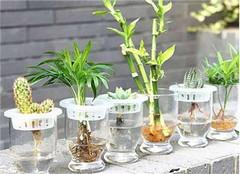 水培植物换水注意事项 一起来看看吧