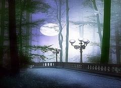 月光森林墙纸优点 让你更清晰