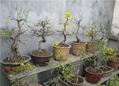 家庭盆栽植物肥料有哪些 让你学会施肥