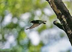 相机拍摄飞鸟的技巧 让飞鸟完美呈现在你眼前