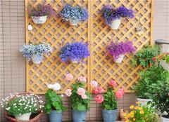 阳台养花注意事项和好处 打造梦想中的后花园