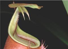 食肉植物为何会嗜血 探索未知之谜