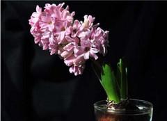 常见草本植物分类有哪些 小编为你来解析