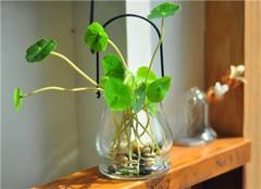 如何让植物安全过冬 三大类都全了