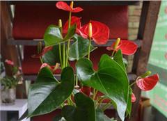 新买来的花卉盆栽养护技巧 新手必看