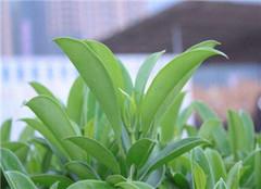 观赏植物栽培与养护技巧 新手必看