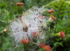 植物传播种子的方法有哪些 看了你就知道