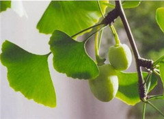 掌握植物的分类方法 科学辨别植物种类