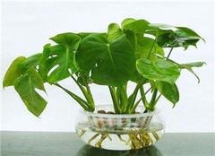 自制水培植物营养液配方 方便又快捷