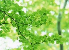 绿色植物的光合作用 重要性不言而喻