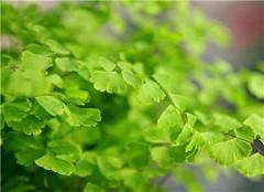 常绿盆栽植物有哪些 这十种百分之九十都养过