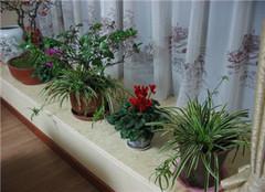 家养植物浇水方法 科学浇水更简单