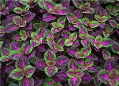 室外最好养的植物有哪些  这些你都不用管