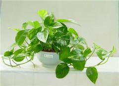 好养的喜阳植物有哪些 这五种绝对好养