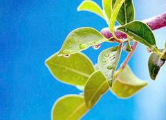 植物叶片清洁小诀窍  让植物不受灰尘侵扰