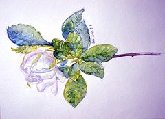 栀子花叶子发黄处理小诀窍 让植物重返白皙