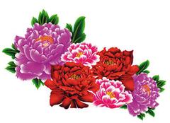 牡丹花养殖小诀窍 将国色天香带回家