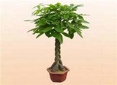 如何给大型盆栽植物换盆 小编给你答案