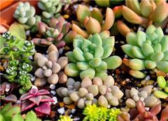 多肉植物怎么养长得快 一起来看看