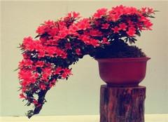梅雨季节养花注意事项 让你的花卉更好成长