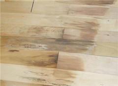  实木地板生虫了怎么办 有哪些解决方法呢?