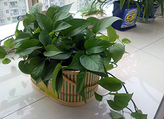 不同空间植物搭配要领 会有意想不到的效果