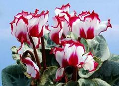 夏季养花要怎么做 花也要避暑