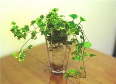 水培植物为什么烂根解决方法有哪些