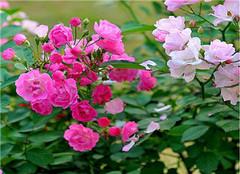 怎么制作花卉培养土 从选材做起