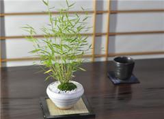 盆栽竹怎么养好 让你的盆栽更刚劲挺拔