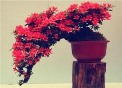  盆栽花卉叶子为什么会发黄