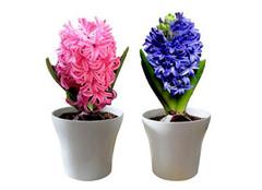 家养植物养护方法有哪些 都是大同小异的