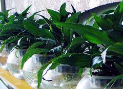 家中养花应该如何施肥 施肥技巧一定要掌握