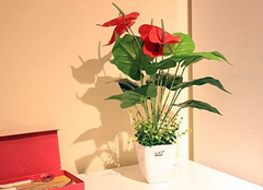 客厅植物摆放禁忌 家居生活无意外