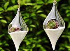 家中养花施肥有哪些技巧 注意不可乱施肥