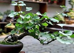 阳台养花需要注意哪些事项 不同环境选择不同植物