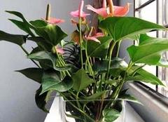 常见的有毒植物有哪些,你注意到了吗?