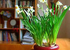 家中养殖植物的实用技巧 还你一个清新的家居环境