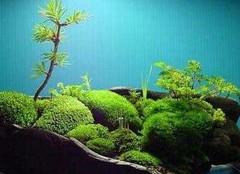 苔藓盆景的制作方法及注意事项,一起来看看吧!