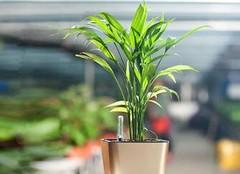 适合室内养的植物有哪些,不需要阳光也能活!